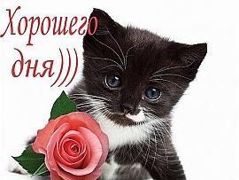 http://cud.zaxargames.com/d/content/users/content_photo/d4/de/xnAMdNKikh.jpg